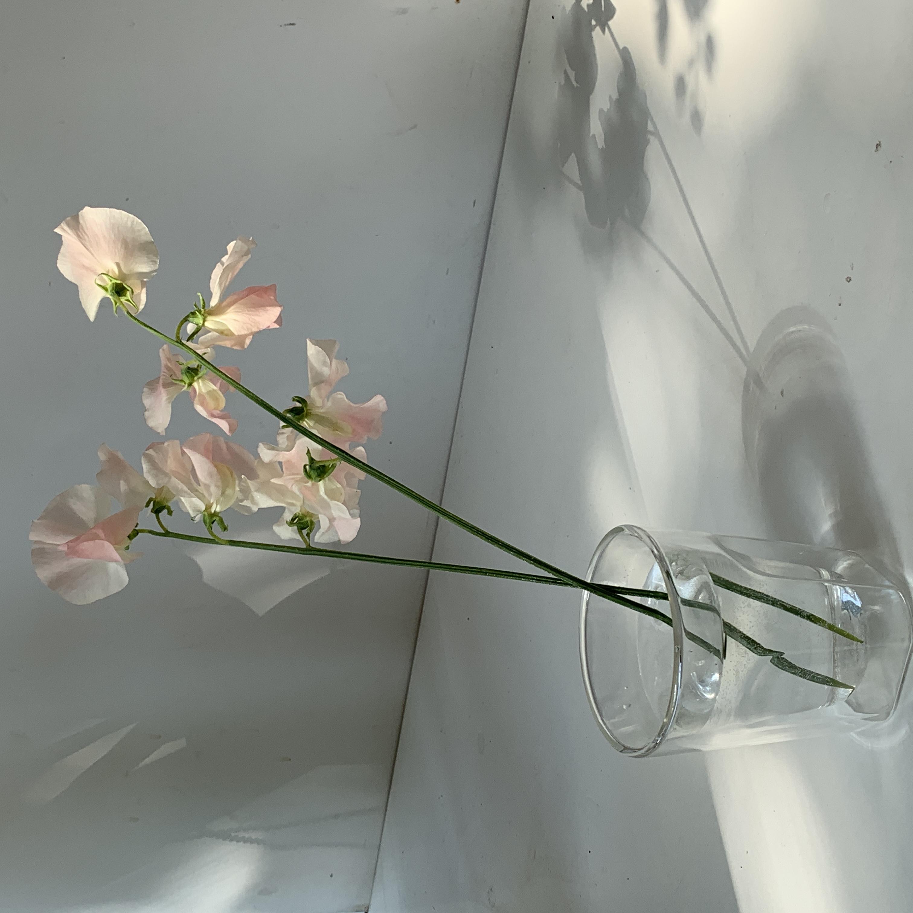 Листівка Квіти